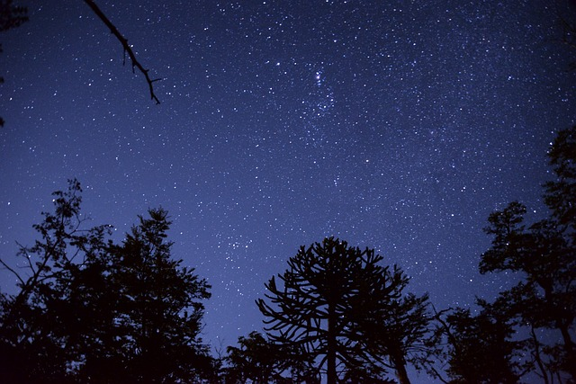 noche_arboles